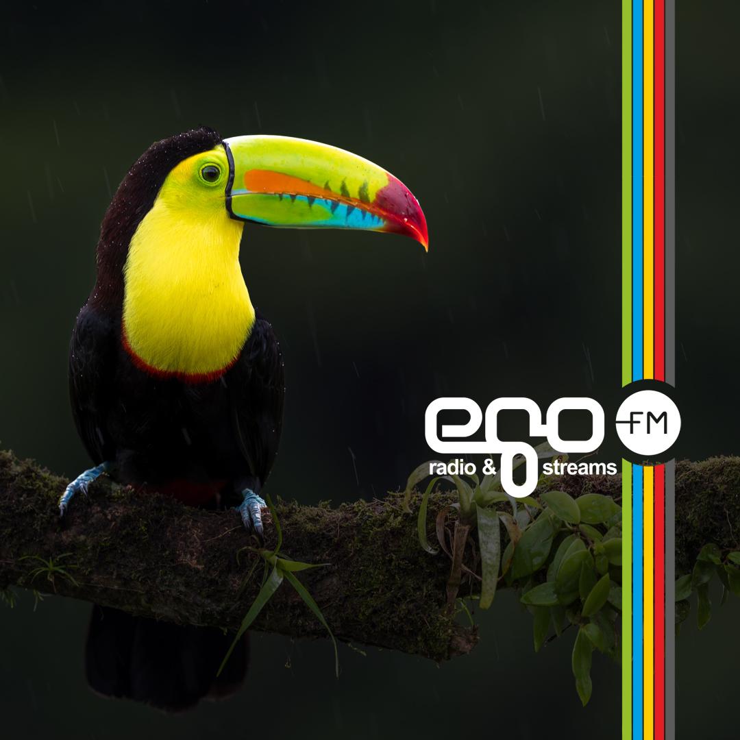 Der egoFM Vogel TOUCAN